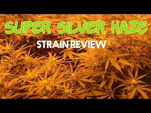 Purple Punch Strain Review (The Strainger Ep  36) | JokePit
