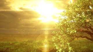 """Peaceful Music, Relaxing Music, Instrumental Music, """"The Golden Forest"""" by Tim Janis"""