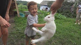 Кролики і Марчик. Подорож в Свірж