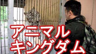 伊豆お薦め名所静岡県伊豆半島・東伊豆稲取「アニマルキングダム」体験型テーマパーク!IzuanimalkingdominIzupeninsula,Shizuoka,Japan
