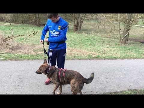 Praktische Joggingleine mit Bauchgurt