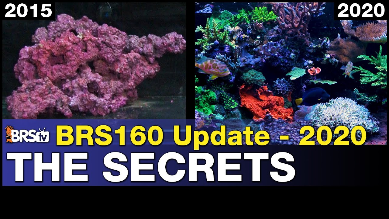 Wins and Secrets of the BRS160.. 52-Weeks to 54-Months!