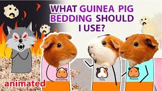What Guinea Pig Bedding Should I Use 2020 | GuineaDad