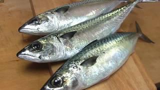 鯖のさばき方~しめ鯖の作り方と握り 寿司屋の仕込み how to fillet a mackerel  and make sushi and shimesaba