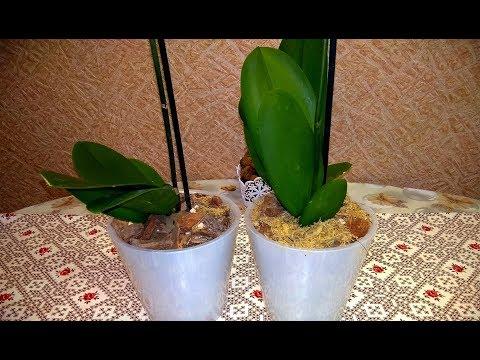 АНАПА Пересадка цветущих орхидей