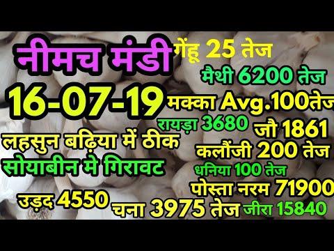 नीमच मंडी भाव 16-07-19, मंडी भाव , Mandi Rate, Neemuch mandi bhav, neemuch mandi bhav in hindi 2019