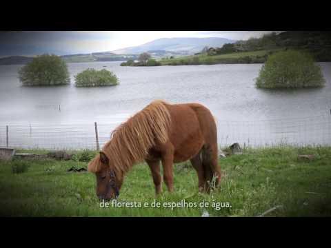 MONTALEGRE - MonteAlegre (2017)