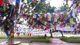 preview picture of video '2014 FOX INDIA Lumbini-2'