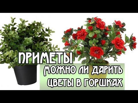 Можно ли дарить цветы в горшках / НАРОДНЫЕ ПРИМЕТЫ