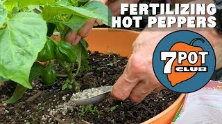 Fertilizing Hot Peppers - How I Grow Hot Peppers Outdoors - Week 7