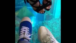 Егор Крид и Кристина Си в Дубае/ 16.01.17/океанариум 2