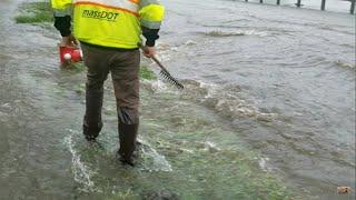 Draining Major Street Flooding, Multi Street Flood Caused By Beaver Clogged Culvert Uncut