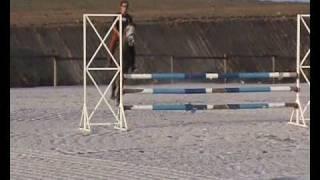 Acrobat  (Portuguese Sport Horse)