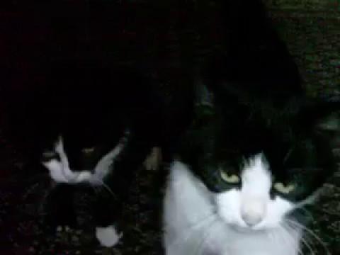 crni penis rastezanje maca