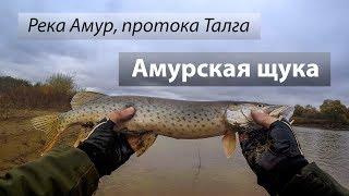 Река Амур, протока Талга, Россия. Амурская щука на джиг. 2017/10