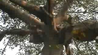 ผึ้งผีกับคนป่า ท้าให้ดู