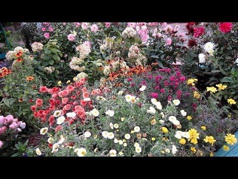 Неприхотливые МНОГОЛЕТНИКИ, цветущие все Лето