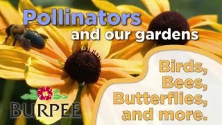 Pollinators and Our Gardens- Butterflies, Bees & More