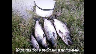 Ловля красной рыбы в карелии где