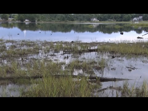 NJTV News: Ghost forests provide proof that sea level rise exists