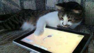Животные играют в игры для ipad