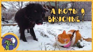 Рыжик, Гаффи и Ночка гуляют по первому снегу