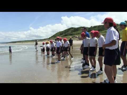 種子島の学校活動:岩岡小学校長浜海岸でウミガメ放流体験2016年