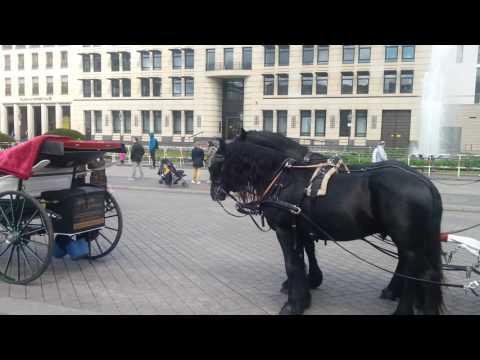 Articolazioni cavallo balsamo forum