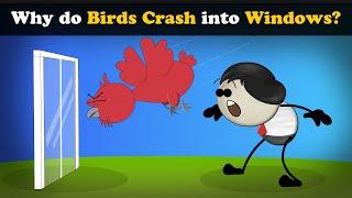 Why is bird hitting window