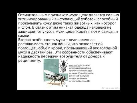 КИНЕТОПЛАСТИДЫ, Trypanosoma brucei gambiense, Trypanosoma brucei rhodesiense, Trypanosoma cruzi