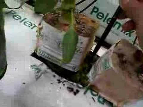 Cura di alcolismo del 2012