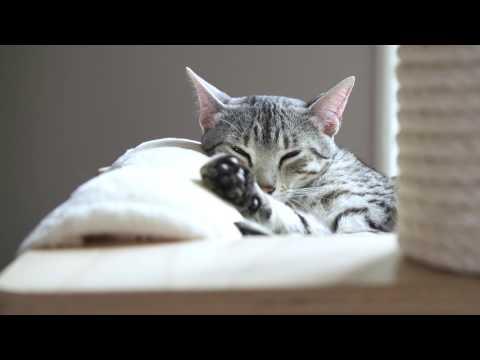 Qual è l'ambiente domestico ideale a misura di gatto?