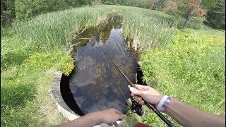 Roadside Small Creek Fishing For Clear Water Bass