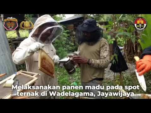 Satgas Binmas Noken Panen Madu Bersama Peternak Jayawijaya