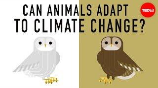 野生生物は気候変動に適応出来る?—エリン・イーストウッド