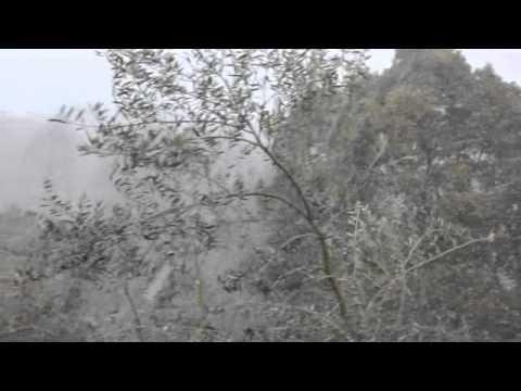 Olivi sotto una fitta nevicata in Giappone