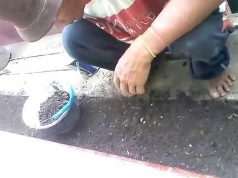Video cerdas sekali, cara menanam rumput jepang