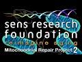 SENS Research Foundation — Проект MitoMouse | Lifespan.io Кампания по сбору средств