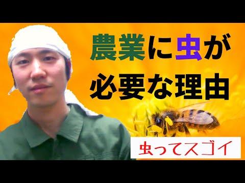 , title : '【嫌われものの虫が必要な理由】「虫との付き合い方」について解説