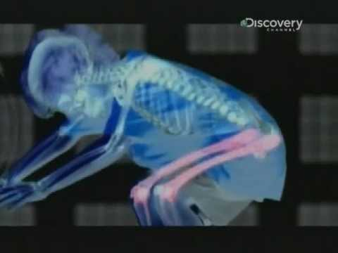 Vacuna giardia canina