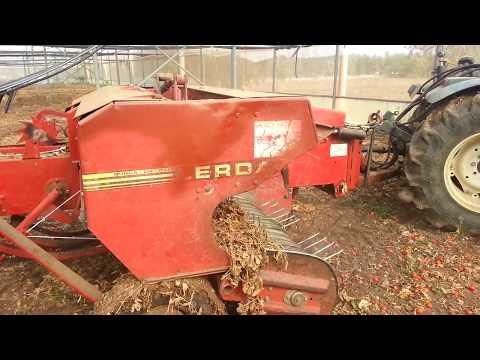 Biomassa di pomodoro