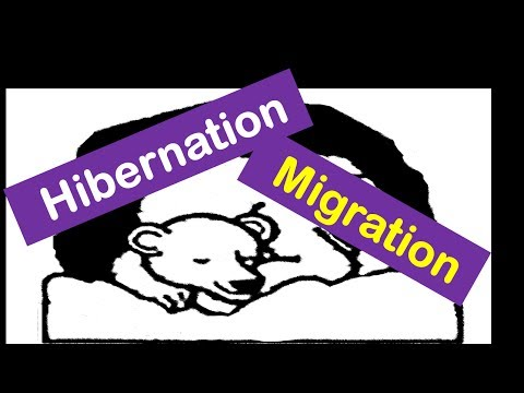 Hibernation \u0026 Migration of Animals -Lesson for Kids