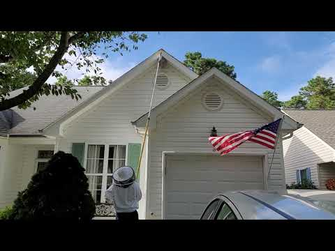 High Rise Hornets' Nest Removal in Jackson,...