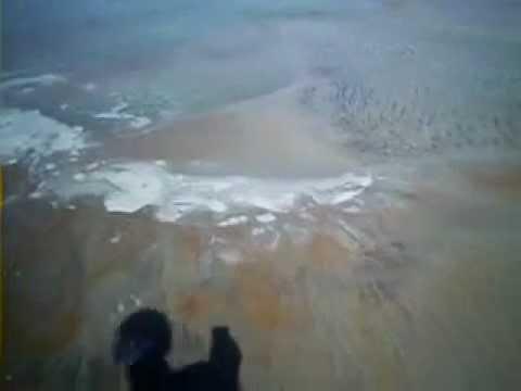 Мексиканский залив, якобы нефтеядные бак