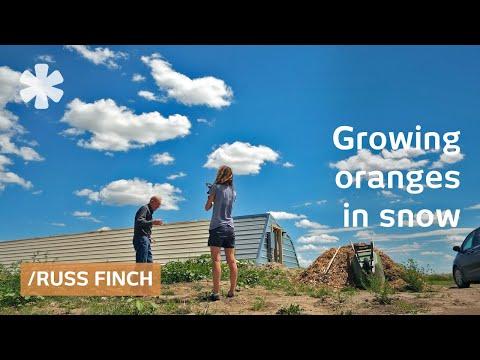 Nebraska retiree uses Earth's heat to grow oranges in snow (2018)