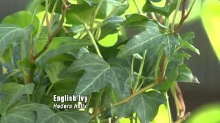 Houseplants for Fresh Air