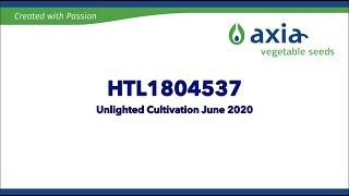 HTL1804537 2020 3