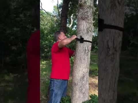 BOW HANGER from BIG WHITETAIL DREAMS