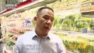 中国人在迪拜沙漠中种菜产量惊人,网上卖菜开创迪拜多个第一!b( ̄▽ ̄)d