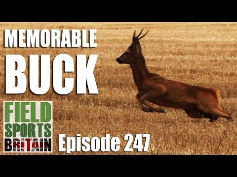 Fieldsports Britain – Memorable Buck